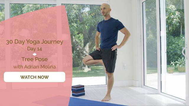 thumbnail image for Day 14 Tree Pose - Adrian Molina