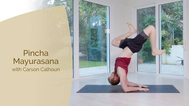 thumbnail image for Pincha Mayurasana with Carson
