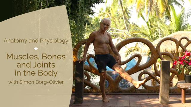 thumbnail image for Muscles Bones and Joints